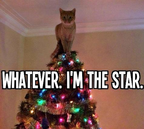 pethreadcatsat.jpg
