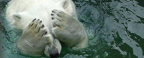 polarbearcry.jpg