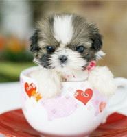 puppy_cup.jpg