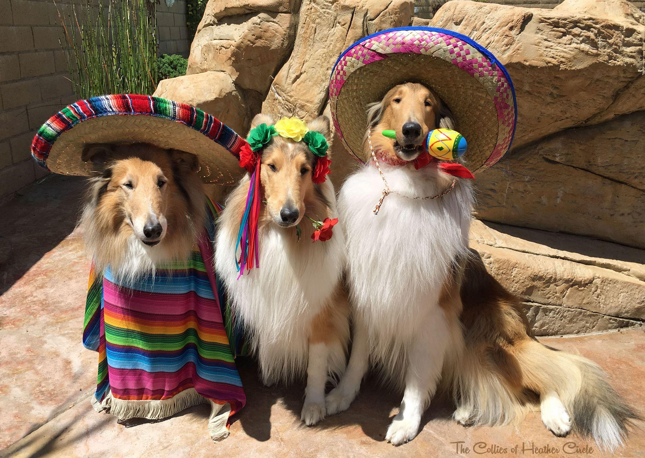 racistdogs.jpg