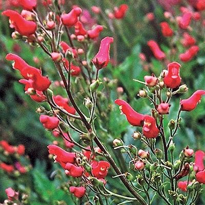 red-birds-in-a-tree.jpg