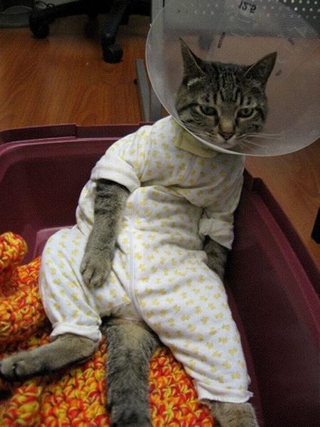 sad-cat.jpg