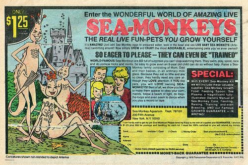 seamonkies.jpg