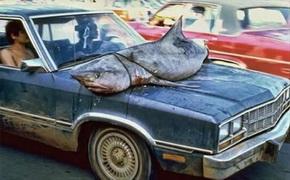 shark_car.jpg