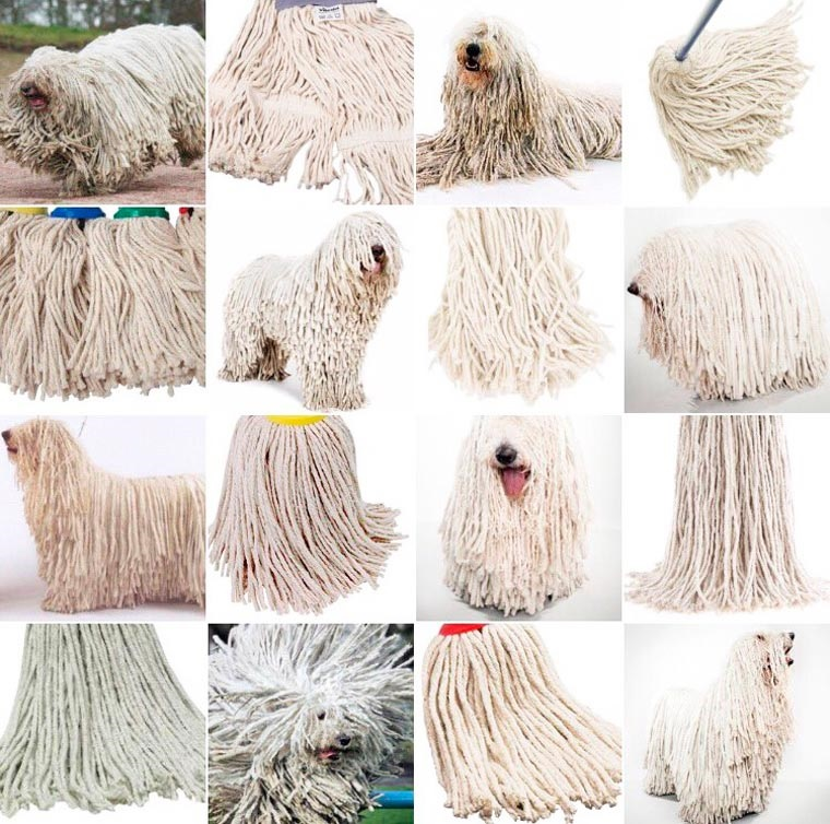 sheep dog or mop.jpg
