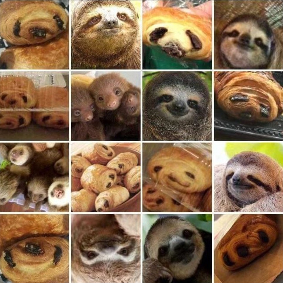 sloth or chocolate croissant.jpg