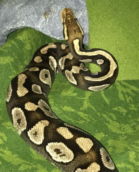 snakeimage1.jpg