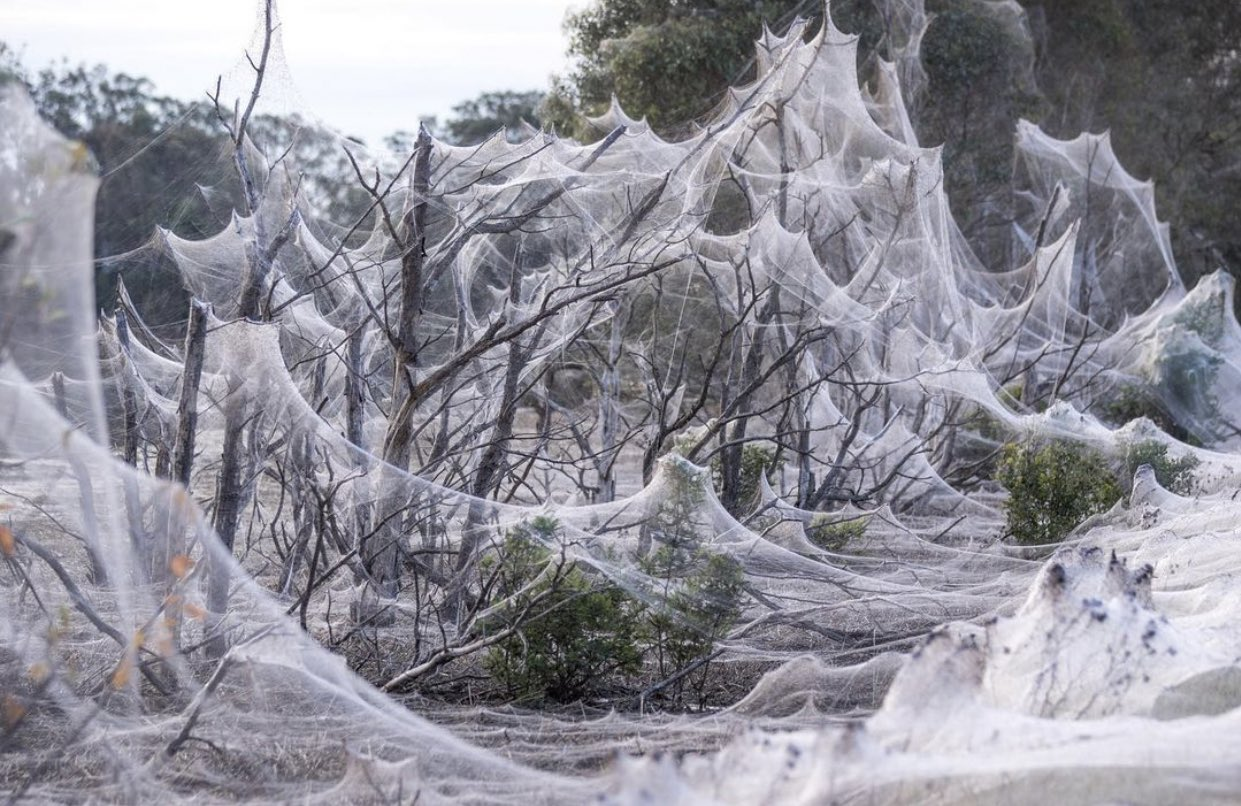 spidershroud.jpg