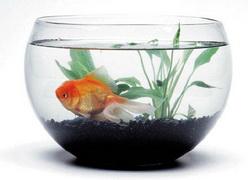 spt_jab_fishbowl_1217.jpg