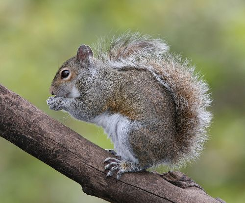 squirrel22.jpg