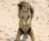 squirrelTesticles2.jpg