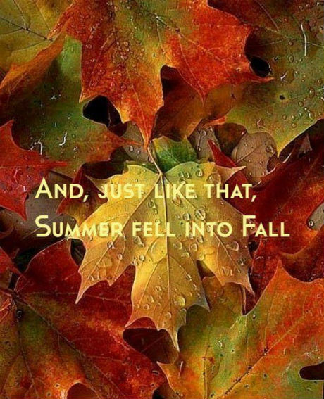 summer fell into fall .jpg