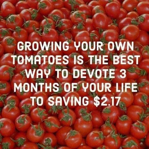 tomaterrs.jpg