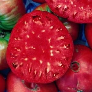 tomatogiantbelgium22.jpg