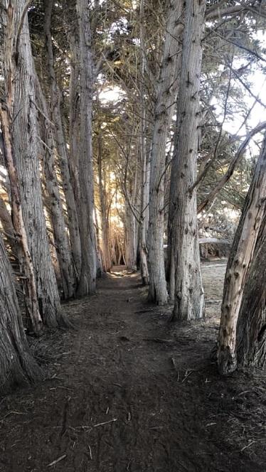 treessansim.jpg