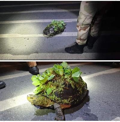 turtlegarden.jpg