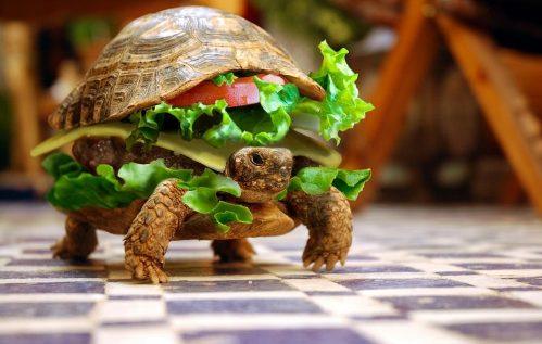 turtlesandwich.jpg
