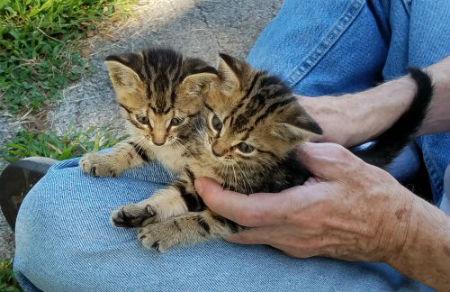 two-tiny-new-kittens.jpg
