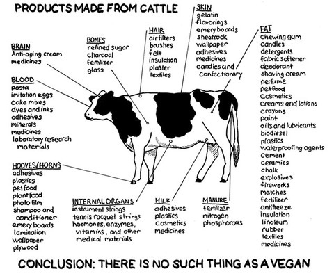 vegans-are-living-a-lie-17633-1288104532-4.jpg