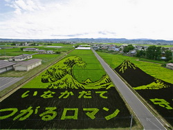 wave-rice-art.jpg