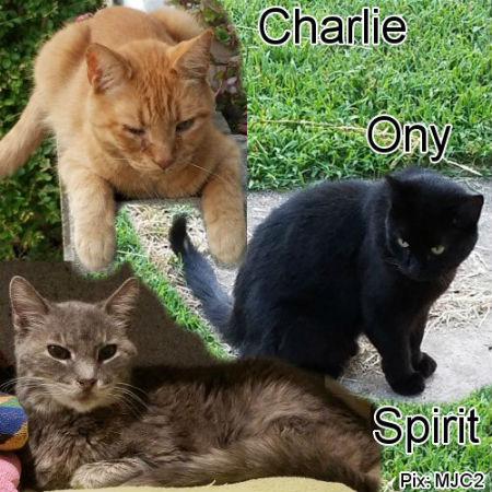 webworker-kitties.jpg