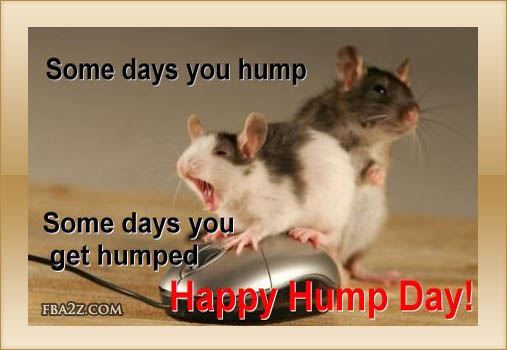 wednesday-humpday-hump-day-hampster-hampsters-mouse-mice-rodent-cute-adorable-pet-best-great-fb-comment-graphics-pictures-photos-images-for-sharing-on-facebook-profile-wall.jpg