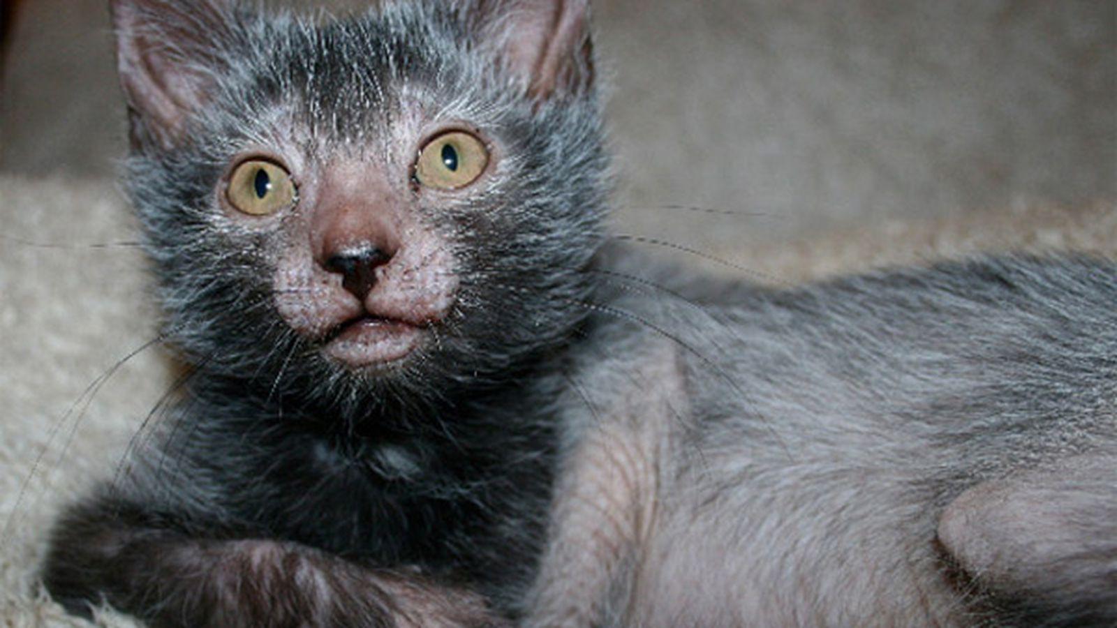 werewolfcat.jpg