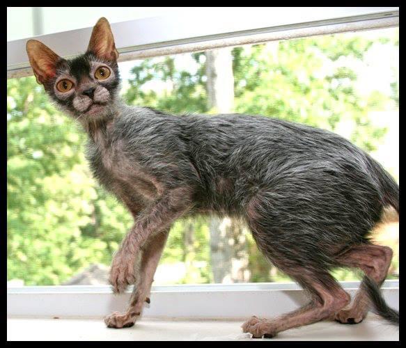 werewolfcat3.jpg