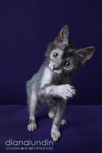 werewolfcat4.jpg