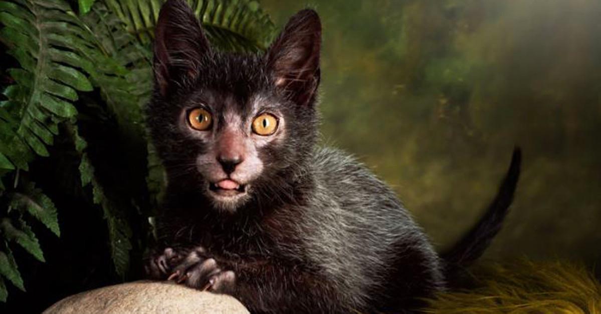 werewolfcat6.jpg