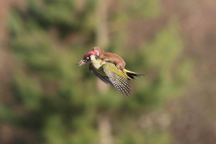 woodpecker-1.jpg