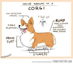 z corgi diagram.jpg