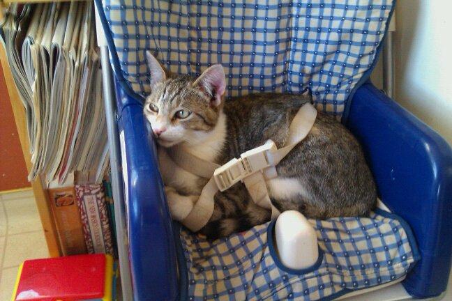 safe-kitten.jpg