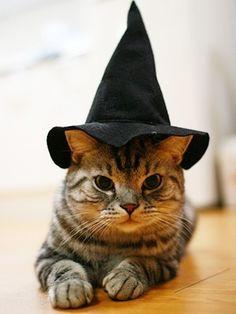 witchkitty.jpg