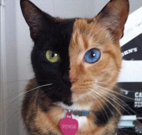 two-tone-cat.jpg